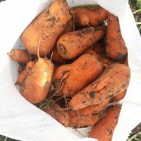 Продам морковь некондицию крупную