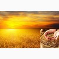 Закупка пшеницы по Запорожской области