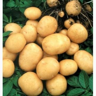 Картофель «Гранада» 3кг.сетка