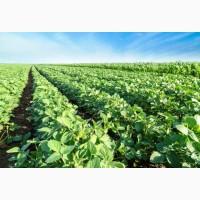 Семена сои Канада, США, Украина, Австрия