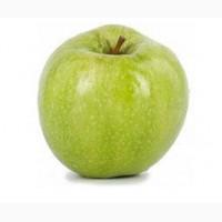 Продам яблоко сорт Ренет Симиренко