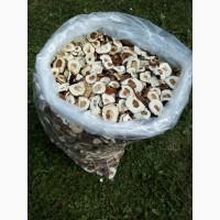 Шапка білого гриба 2020. Ціни вказані за 1 кг
