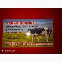 Заготовка купівля Врх корів, бичків, телиць, телят, черкаська область