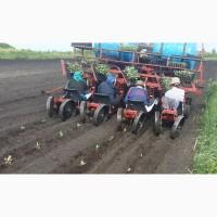 Машина рассадо-посадочная универсальная МРП (для помидоров, капусты, перца, огурцов)