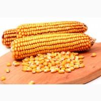 Продам кукурузу 180$/тонна на CIF