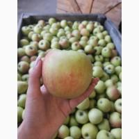 Продам яблоко джонаголд