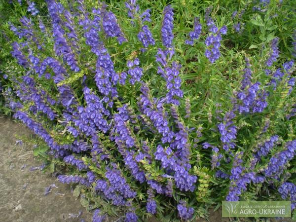 Какие цветы цветут долго (все лето) и как продлить их цветение