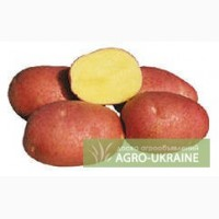 Выращиваем и продаем семенной суперэлитный картофель