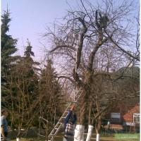 Обрезка садовых деревьев Обрезка старых яблонь Обрезка старых деревьев