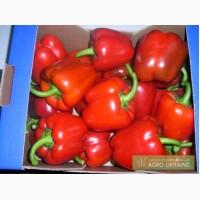 Фрукты и овощи из Испании