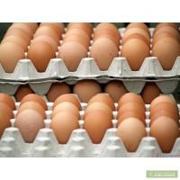 Реалізуємо куряче яйце