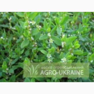 Лекарственные травы оптом