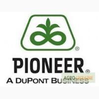 Семена подсолнечника Пионер Оригинал