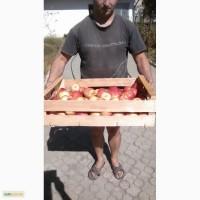 Ящик для сбора и хранения яблок