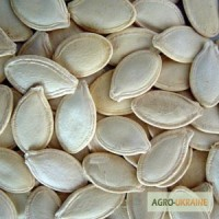 Продам Семена Тыквы, 18тонн. Украинская многоплодная