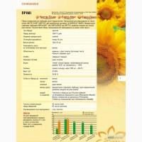Продаж соняшника Примі(Євро-Лайтінг)м.Нові Сад (Сербія)