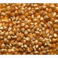 Кукуруза поставка срочно