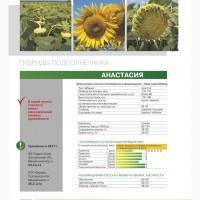 Продам семена подсолнечника, РИМИ-2, Константин, Анастасия