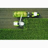 Интересует убрать 700 га кукурузы на силос нужен силосный комбайн найму с 10 Августа