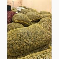 Кругляк (Грецкий орех) 14 грн/кг