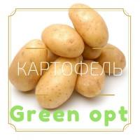 Картофель оптом с доставкой по Киеву и обл.+Отсрочка платежа