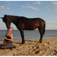 Продам лошадь 15000 грн