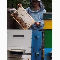 Продам соняшниковий мед
