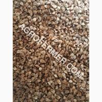Семена гречихи PENNY Канадский трансгенный сорт (элита)