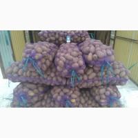 Продам картошку оптом