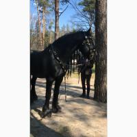 Купить комплект на лошадь уздечка нагрудник недоуздок