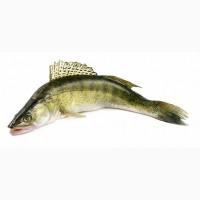 Речная рыба, замороженная, вяленная