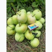 Продажа яблук джонаголд