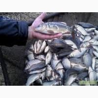 Продам живую рыбу малька одно летка двух летка