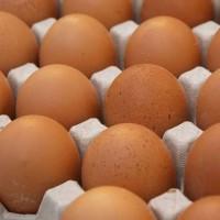 КОББ 500 бройлер яйца инкубационные (Чехия)