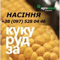 Насіння кукурудзи Pleven ФАО 270 та Madivo ФАО 340 (Maisadour Semences), Доставка