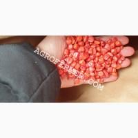 Семена кукурузы POINT ФАО 330 канадский трансгенный гибрид