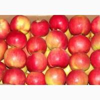 Яблука оптом, Айдаред
