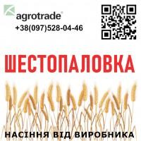Семена пшеницы Шестопаловка (элита) от производителя ...