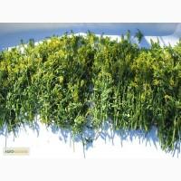 Травы лекарственные - купить лекарственные (целебные) травы, корни и растения