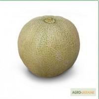 Семена дыни KS 55 F1 (Китано)