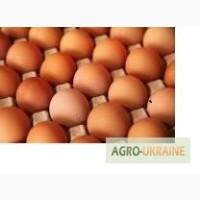 Продажа яйца куриного