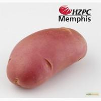 Насіннєва картопля Мемфіс