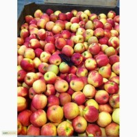 Продам яблука опт з холодильника