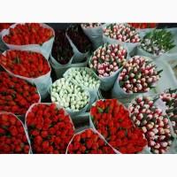 Квіти зрізні бавовник, ілекс, троянда, тюльпани