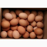 Продам яйця курячі з власного селянського господарства