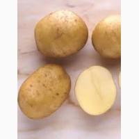 Картофель разных сортов оптом
