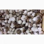 Білий гриб заморожений