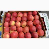 Продам яблука, холодильне зберігання, газовані