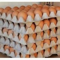 Продам яйцо куриное столовое крупное, отборное, С-1, коричневое и белое мелким оптом от 5