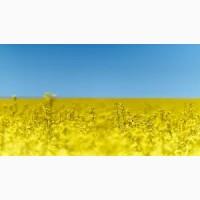 Закупка сельскохозяйственной продукции. Соя, купшеница, куруза, подсолнечник, рапс
